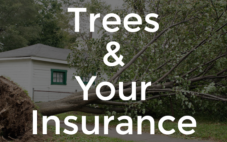 Your Insurance When It Comes To Trees
